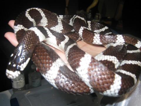 A_Fucking_Snake